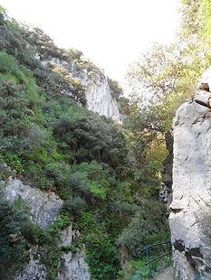 Photo montrant la densité de la végétation dans les gorges de Sam Jaume.
