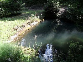 Photo d'un vieux bassin enfoui sous la végétation.