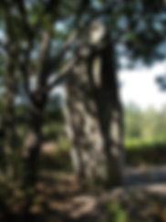 Imposant menhir de ceinturat avec sa corniche, vue de profil.