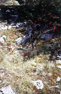 variante de dolmens : les coffres funéraires, une vue rapprochée du coffre funéraire 1