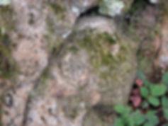 Les énigmes de Morenci. Signes gravés semblable à ceux de la croix, vue élargie