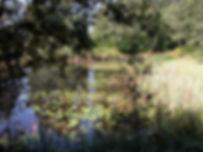 Randonnées pédestres dans des lieux insolites. Photo : un étang couvert de nénuphars