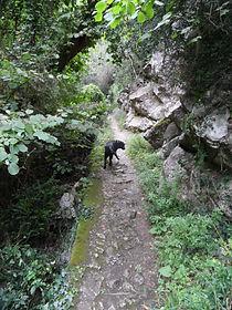 Photo d'un chien marchant sur le chemin en corniche des gorges de San Jaume.