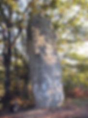 Imposant menhir de Ceinturat avec sa corniche, vue de trois-quart.