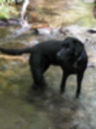 Photo montrant un chien en train de se baigner dans le ruisseau de San Jaume.