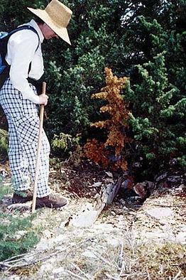 variante de dolmen : coffre funéraire. photo : une randonneuse découvre un de ces coffres