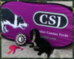 CSGD Doggo 2.jpg