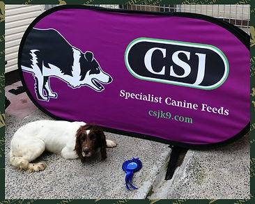 CSGD Doggo 1.jpg