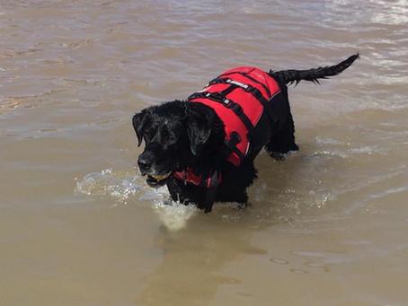 Farewell to My Sweet Water Dog