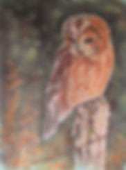 Gallery 4 - Wildlife and other Artwork