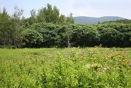 Collaboration projets de recherche biodiversité