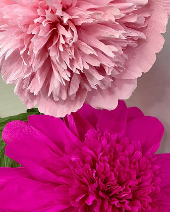 Giant paper flowers- Charm Peonies