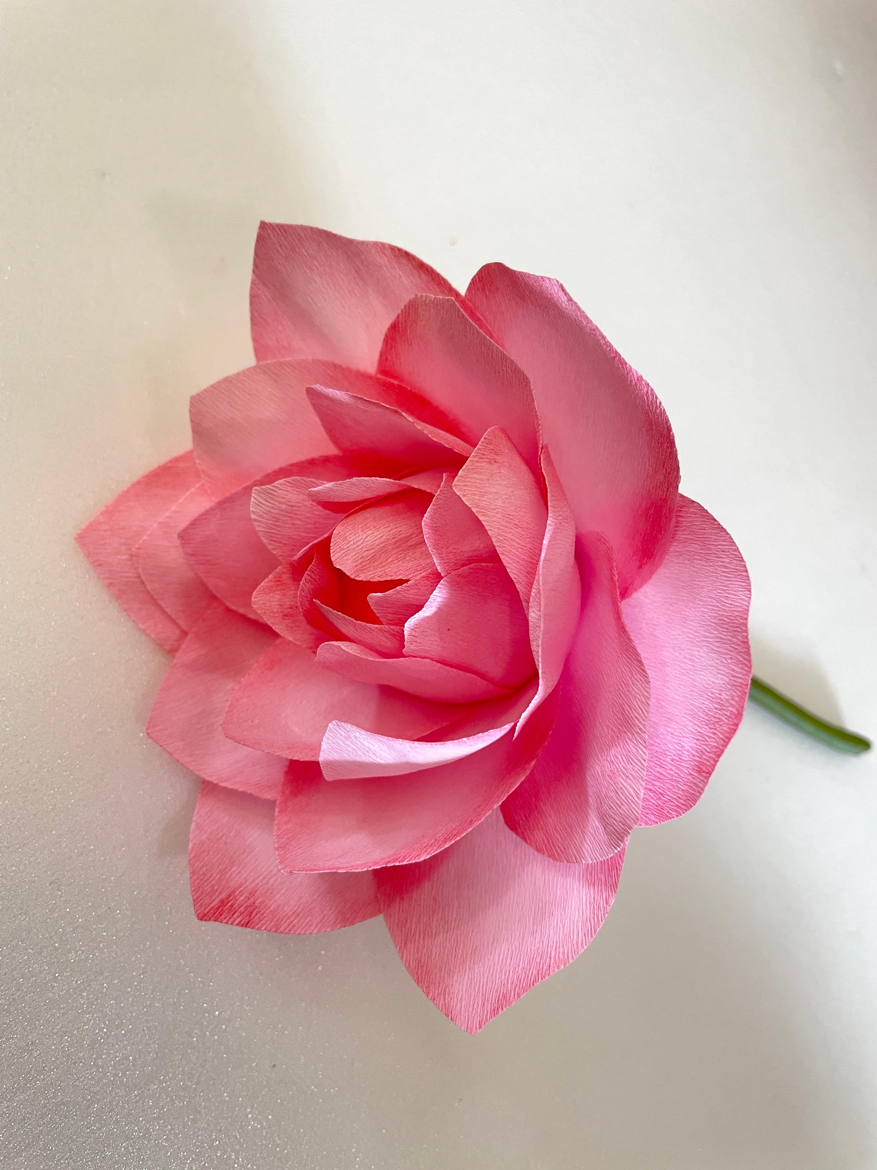 Workshop for paper Lotus Flowers