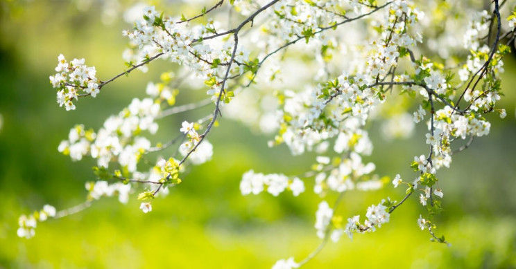 Restorative Yoga: Spring Clean Detox