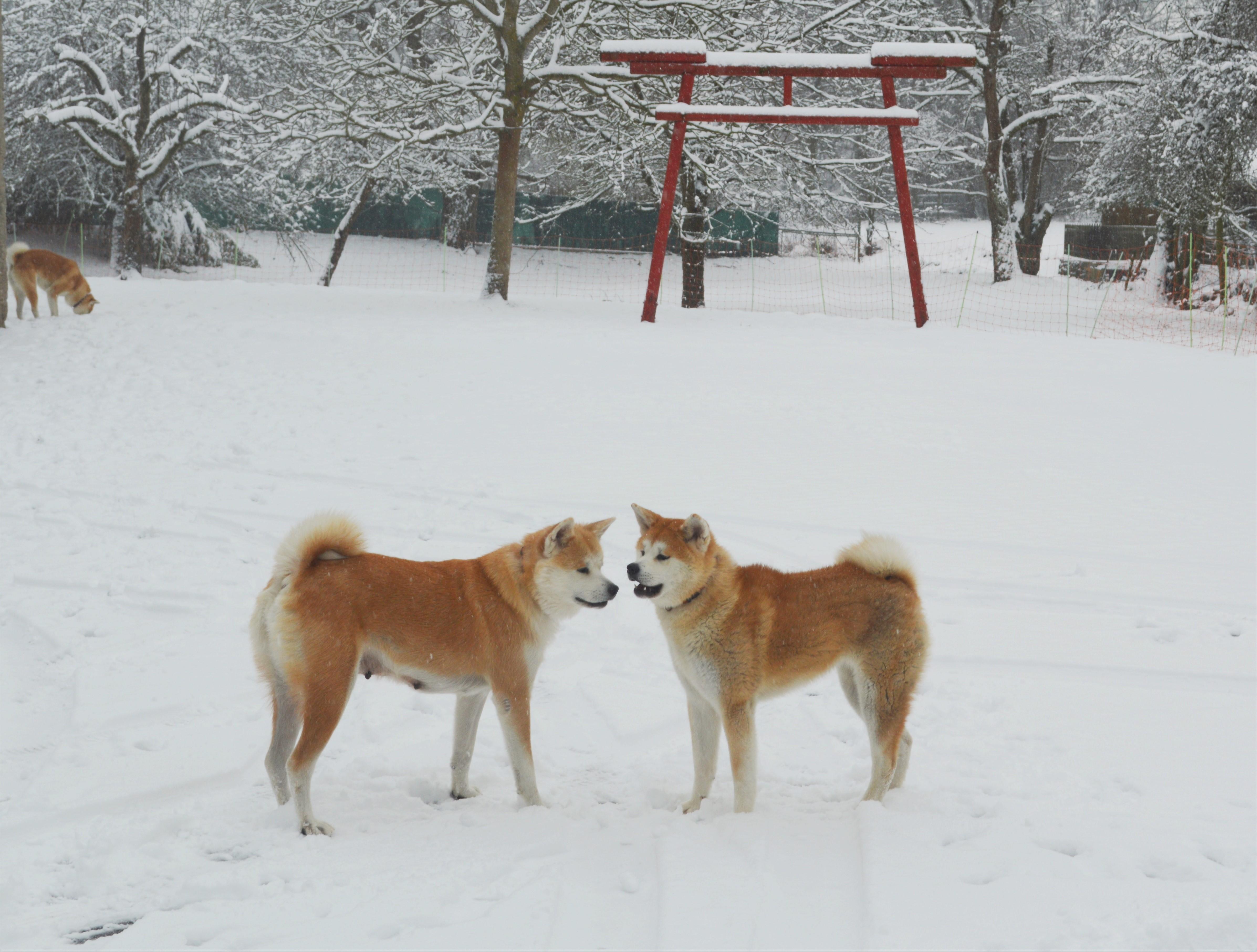 Hunde am  04.01.2016_es hat geschneit