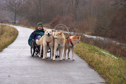 Jonas und die Hunde