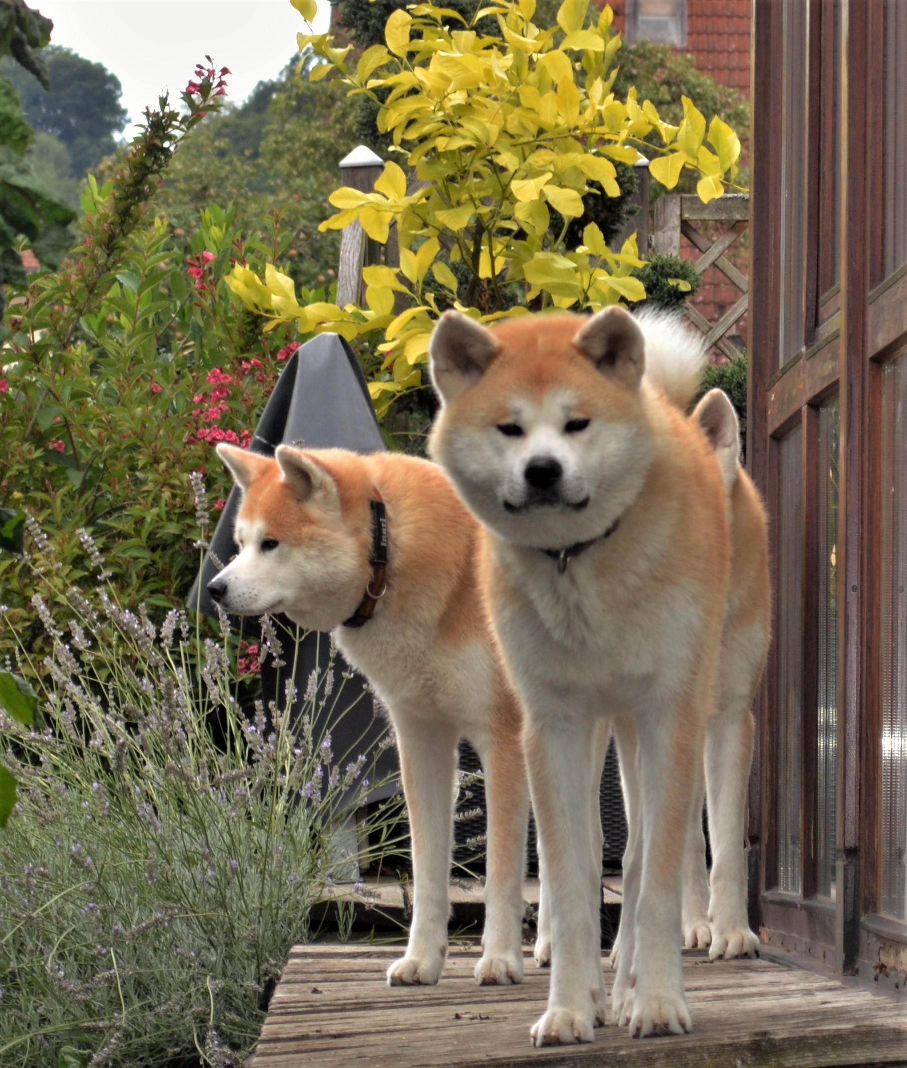 Misaki; Inari und Kenshin am 22.08.2016