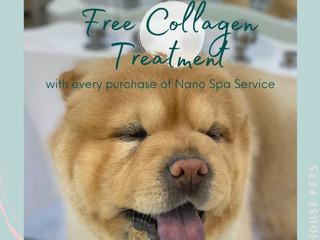 Free Collagen Treatment
