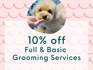 10% off Full & Basic Grooming