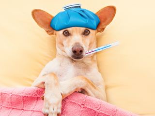 5 Symptoms & Diagnosis for Dogs