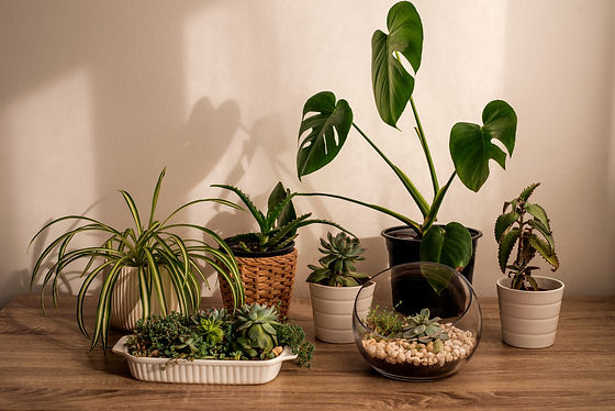 Various%20indoor%20plants%20on%20the%20wooden%20table%20by%20the%20white%20wall_edited.jpg