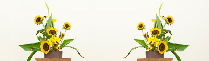 sunflower_bothsides.jpg
