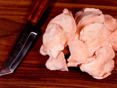 Pretty in pink oyster mushrooms