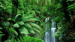 Download-Jungle-Background-Free