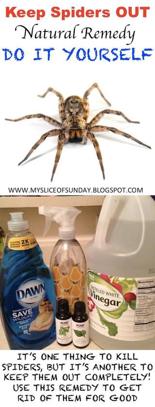 Keep Spiders Away