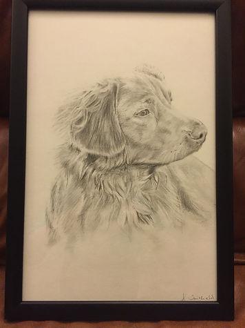 Pencil Dog
