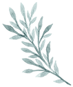 plants-and-leaves-03.png