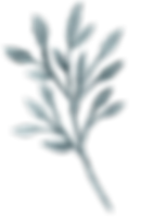 plants-and-leaves-04.png
