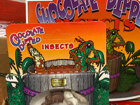 Chocolate Covered Insects