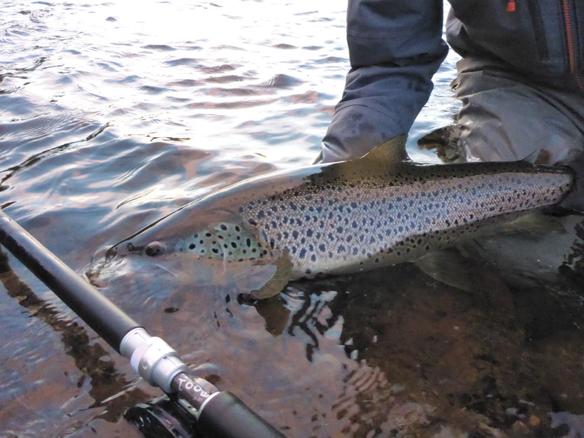 Single or double for Ammarnäs trout?