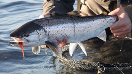 Sea trout video fishing with good friends
