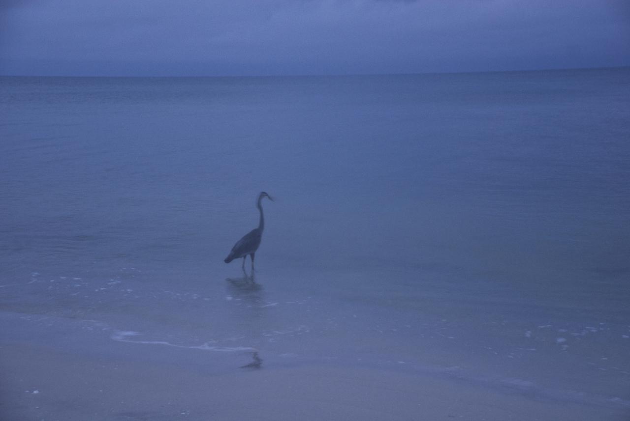 sunriseBeachBIRD