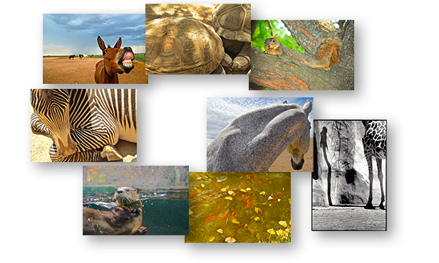 Boxed Set of 8 Color and Black & White ANIMALS / One Greeting Cards