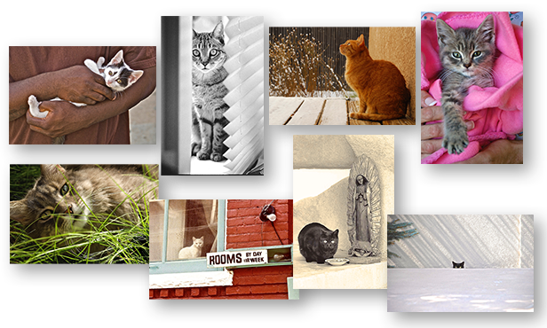Boxed Set of 8 Color and Black & White CATS Greeting Cards