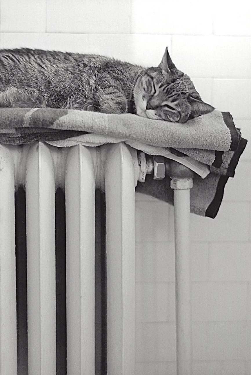 radiatorCAT.jog