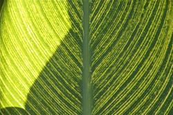 Nature - Leaf