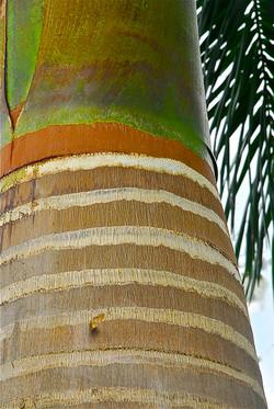straited LEVEL tree