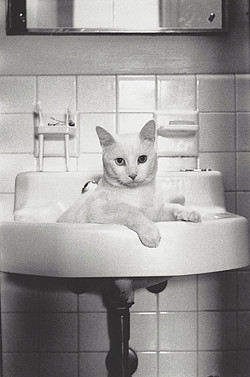 whiteSINKcat-1