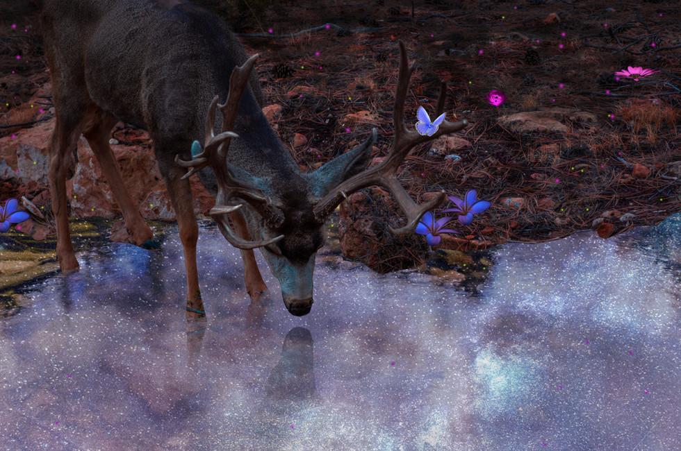 deer munching pretty water.jpg