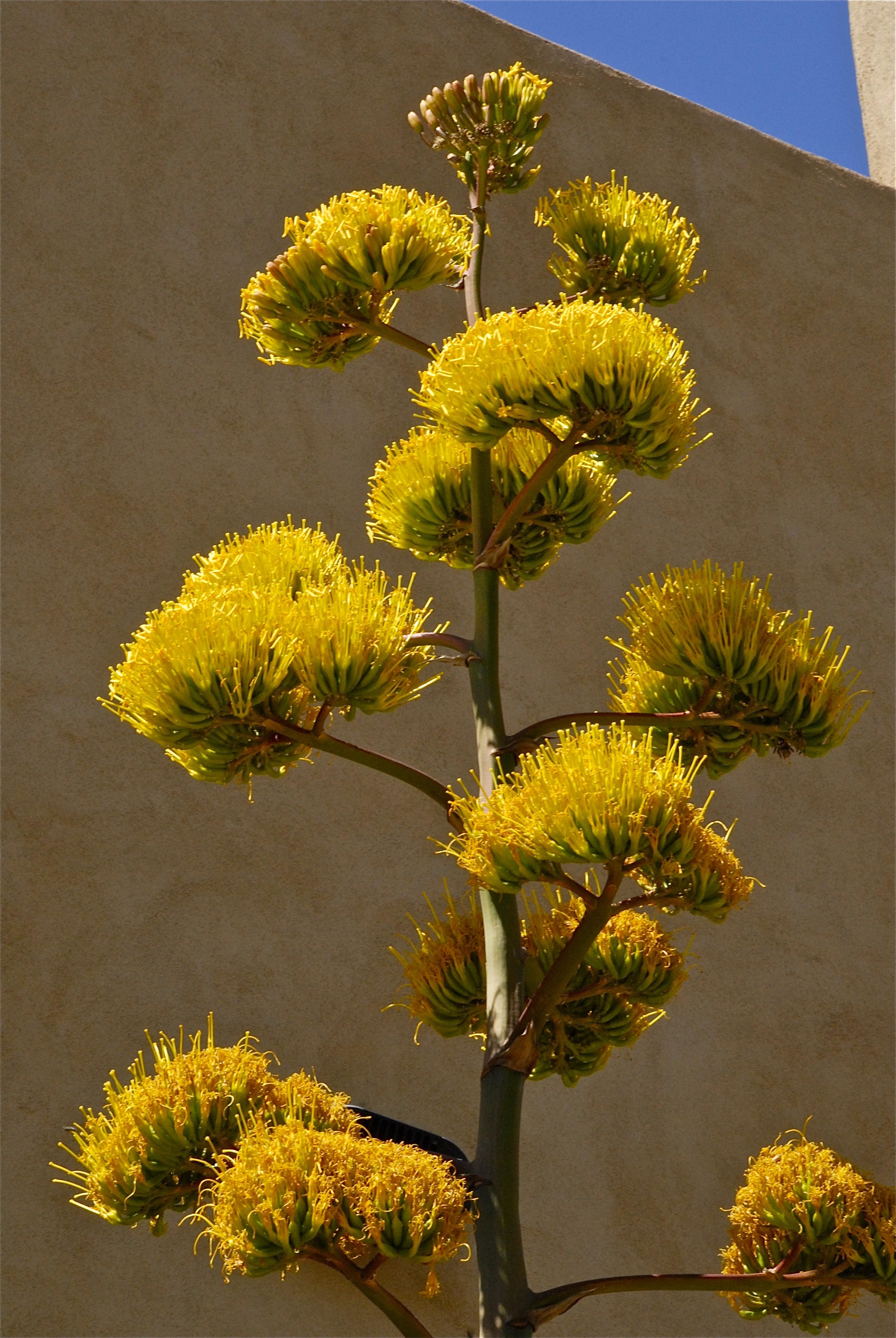 yellowFLOWERtree