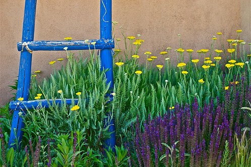 Blue Ladder and Spring Flowers - Abiquiu, NM