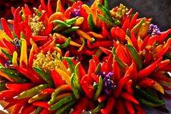 chilis&flowers