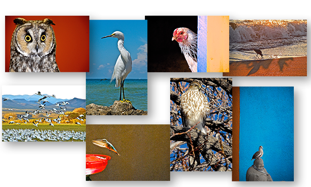 Boxed Set of 8 Color BIRDS Greeting Cards