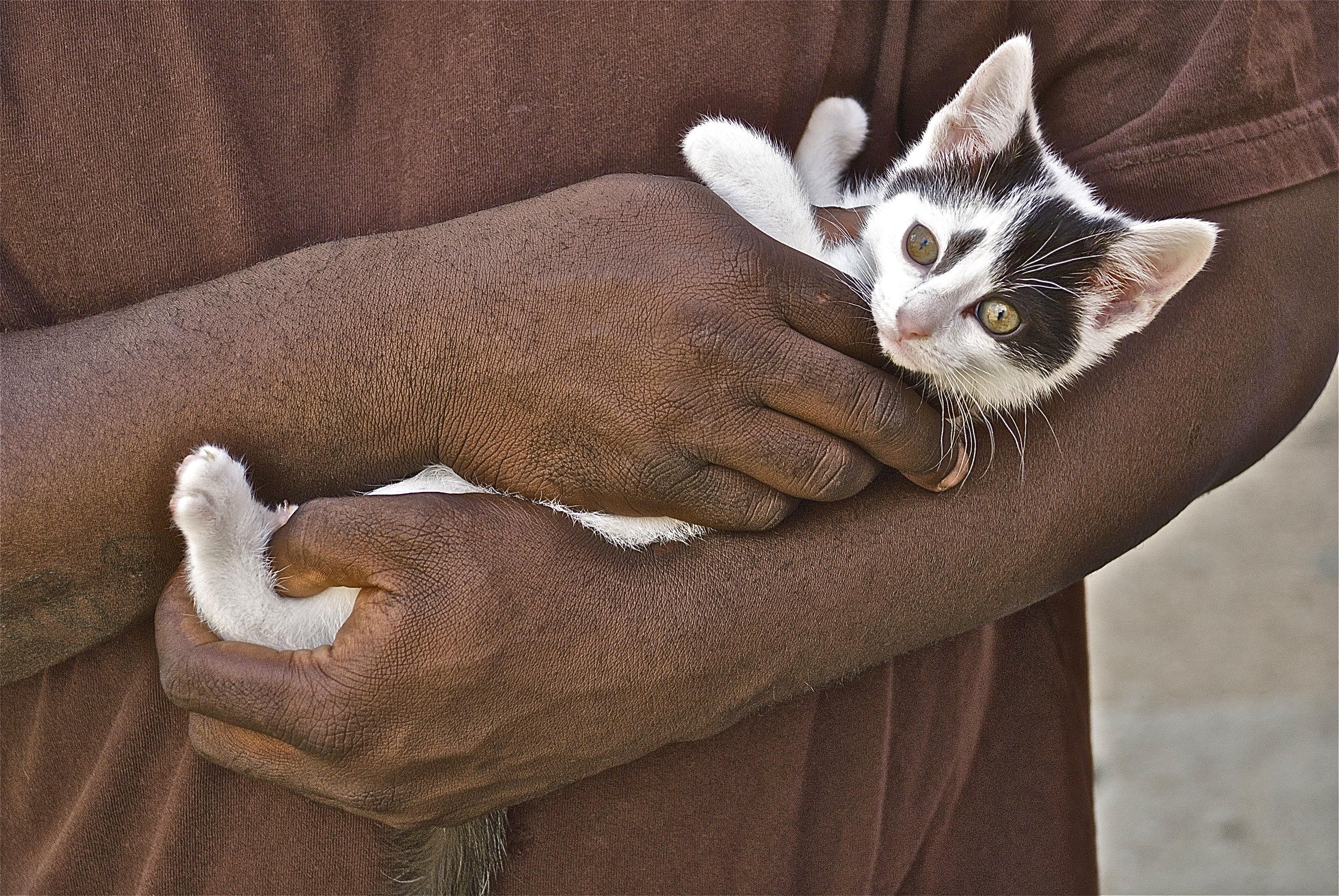 BlackMANw-Kitty2