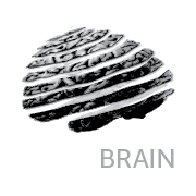 Right-Brain-01.png