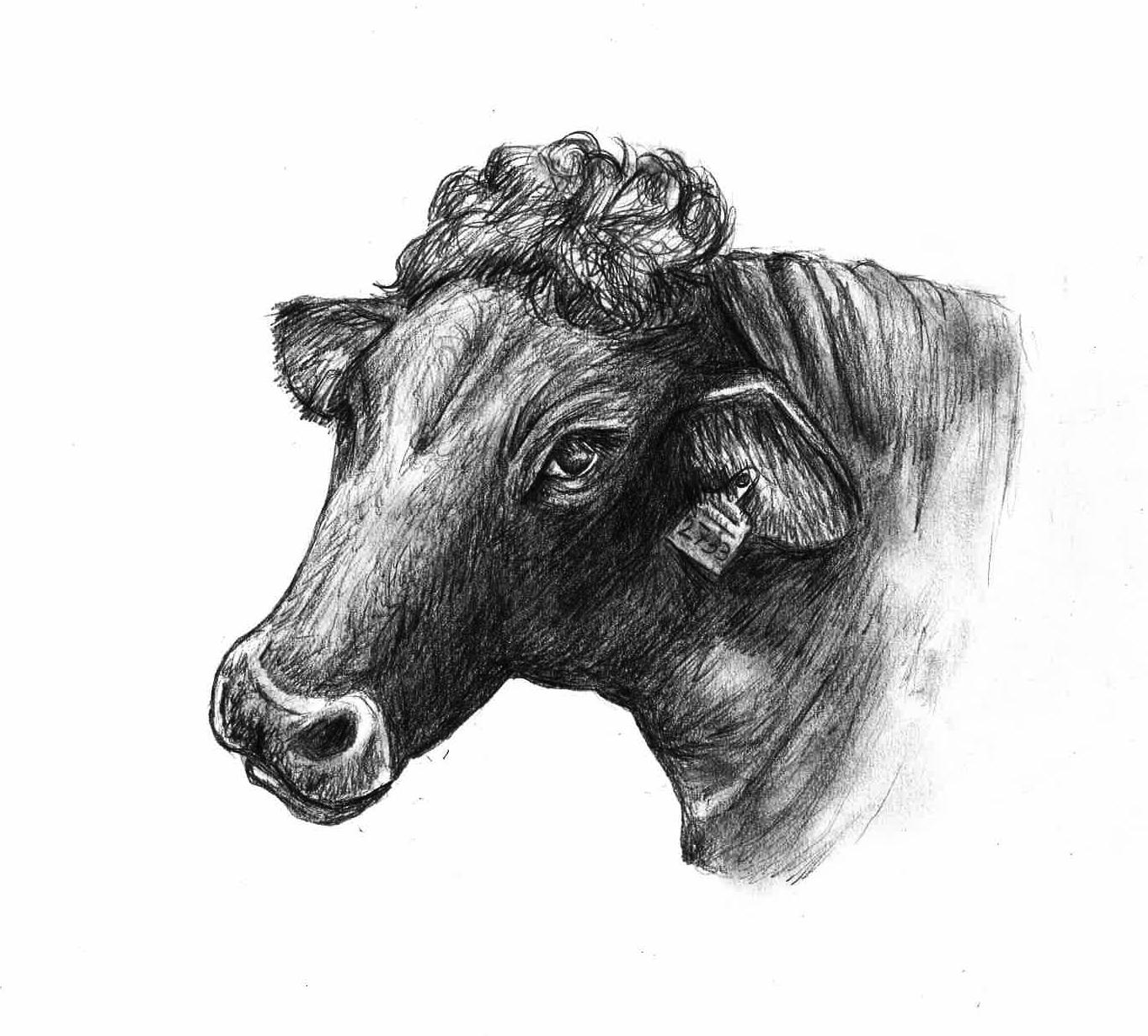 Hermine die Kuh